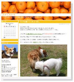 新ブログ「みかんのみ缶」へ・・